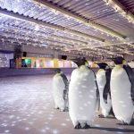 patinoire pingouins londres