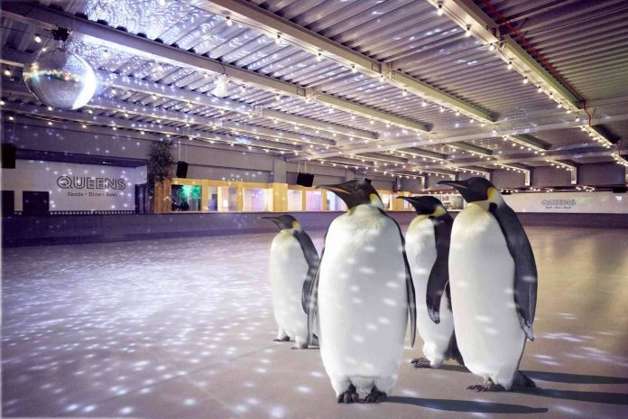 patinoire pingouins londres