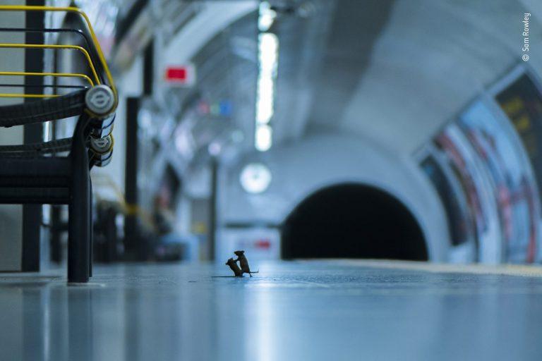 La plus belle photo animalière du monde a été prise…à Londres !